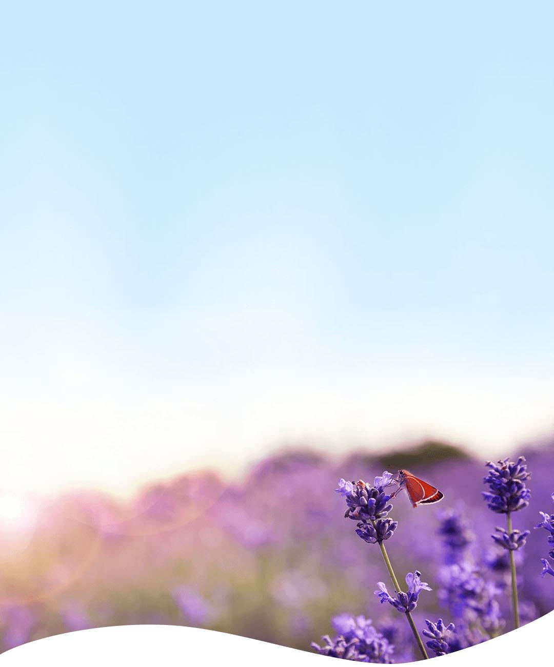 紫の花と太陽の画像